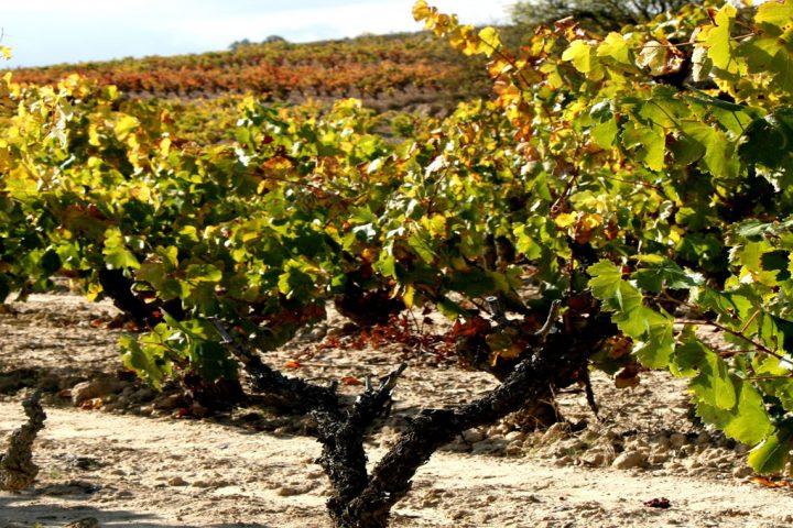 viseta viñedo con Rioja&north